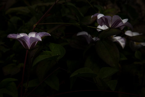 Rare Blossoms