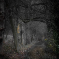 DOVEDALE PATH MIDNIGHT