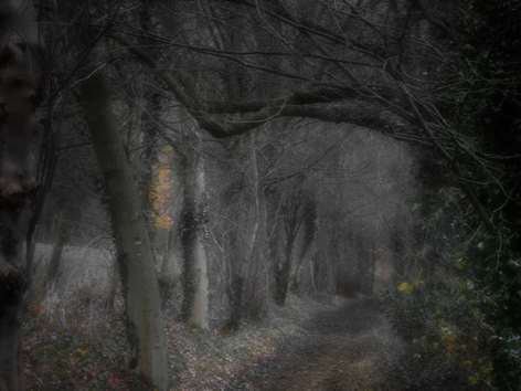 Path in Dovedale Midnight