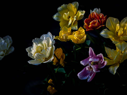 Late Evening Flowers