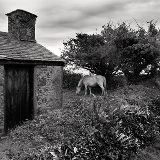 HORSE AND COTTAGE