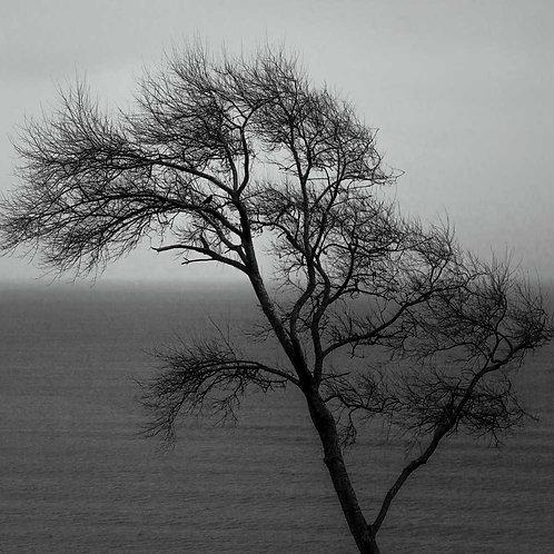 Blackbird Winter
