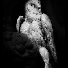 MICHELANGELO'S OWL