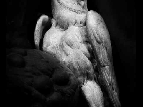 Michelangelo's Owl, Florence