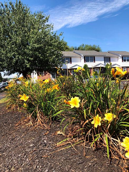 flowers_houses.jpg