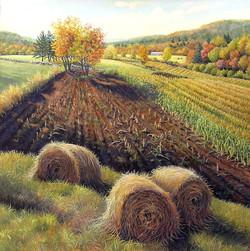 Pastoral Farm Field