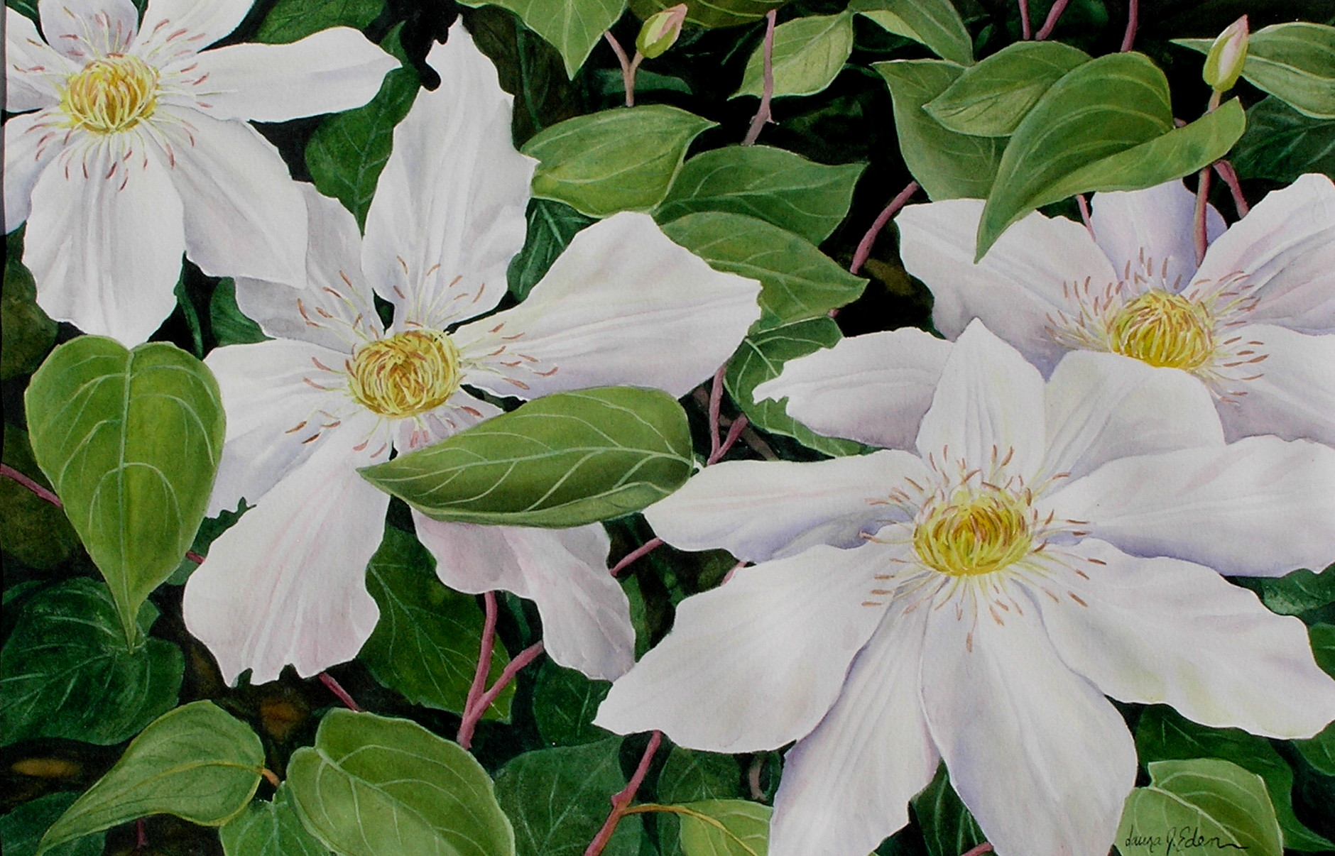 White Clematis Medley
