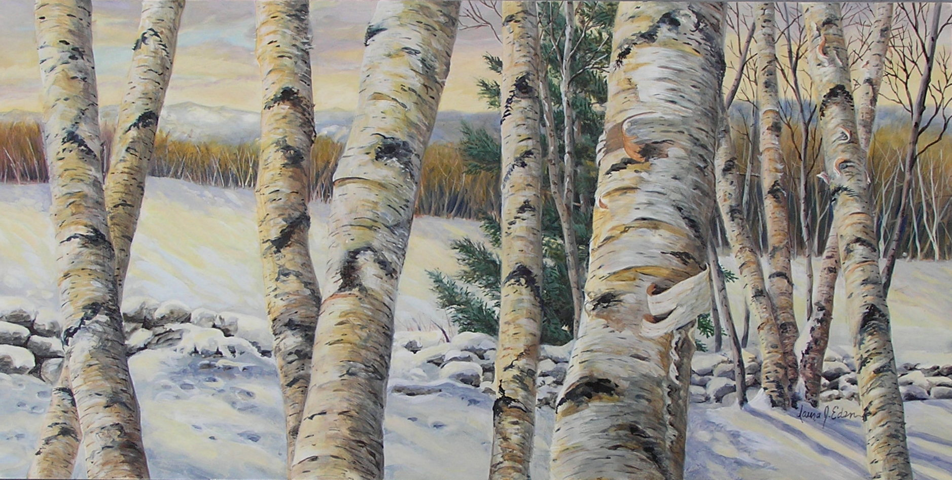 Ochre Light, Birch