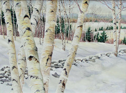 Winter Birch Vista