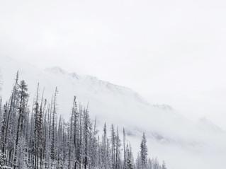 Burnt snowy forest.jpg