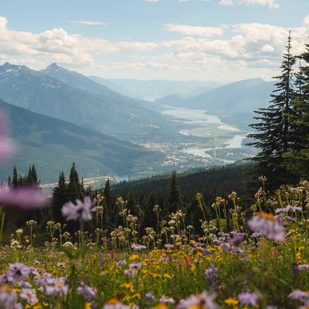 Frisby wildflowers-1.jpg