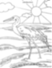 Little Blue Heron- Coloring Sheet .jpg