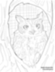 Eastern Screech Owl.png