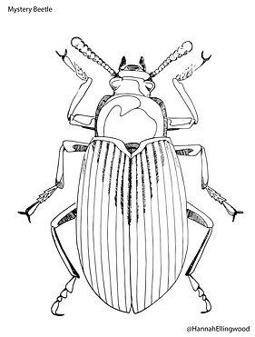 beetle coloring sheet.jpg