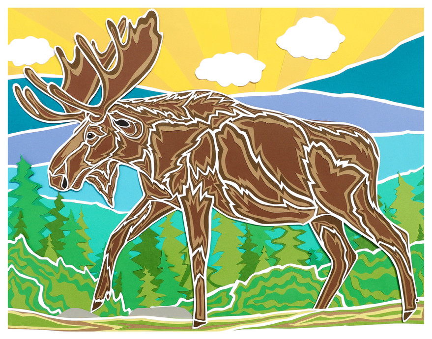 Moose in the White Mountains