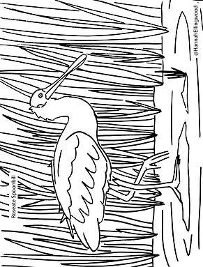 Spoonbill Coloring Sheet.jpg