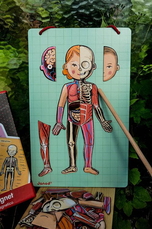 Janod Magnetická skládačka Lidské tělo