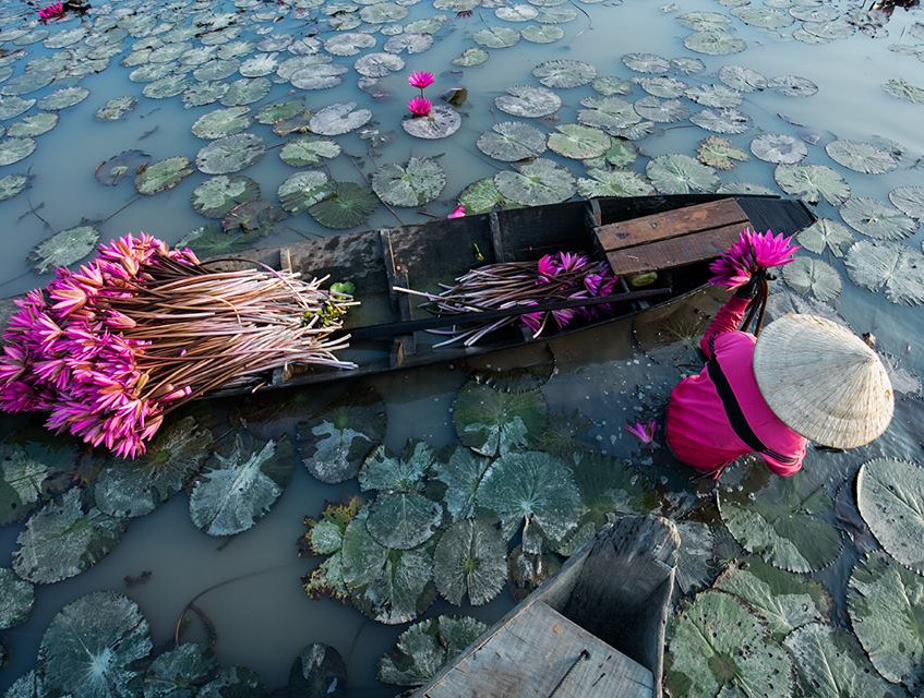 Woman picks water lily