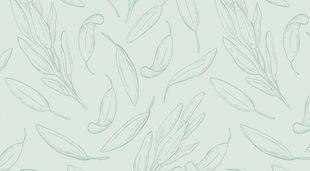 Sage-Illustration_edited.jpg