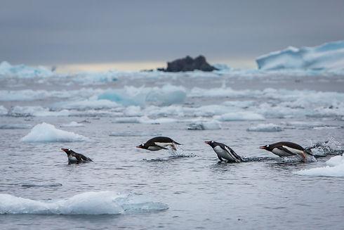 Antarctica-Landscape-T.Branson-1-4.jpg