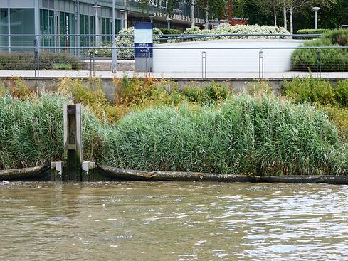 Estuary Edge, River Thames
