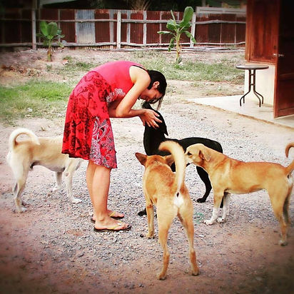 help4strays.org | halfwayhouse 4 paws | dog koh lipe | animal care lipe