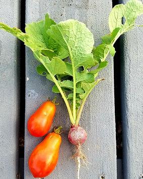 radish and tomato