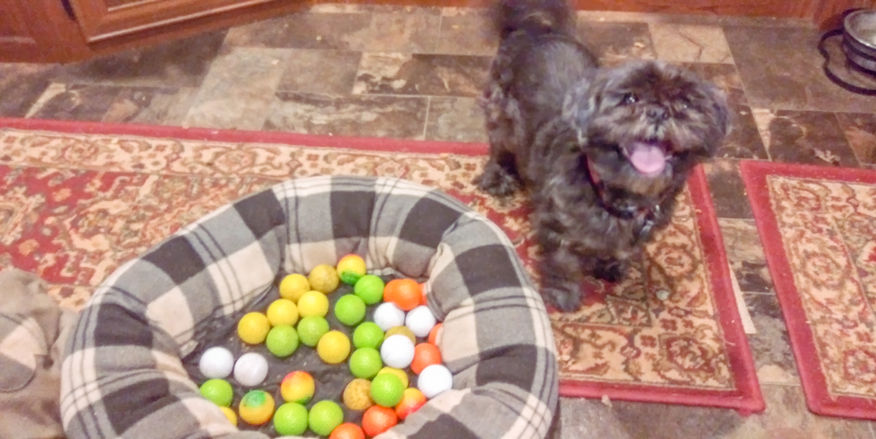 Katie & her balls