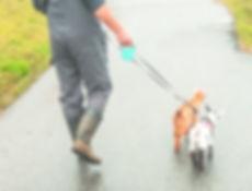 Jeff walking baby goats on leash