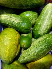 pickeling cucumbers