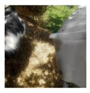 goat 6.jpg