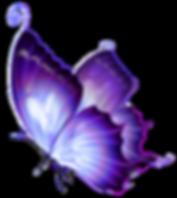 Novel butterfly image
