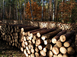 wood_autumn_sawn_timber_sunny_pile_of_wo