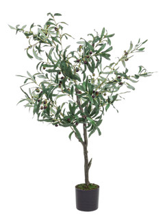 planta olivo.jpg