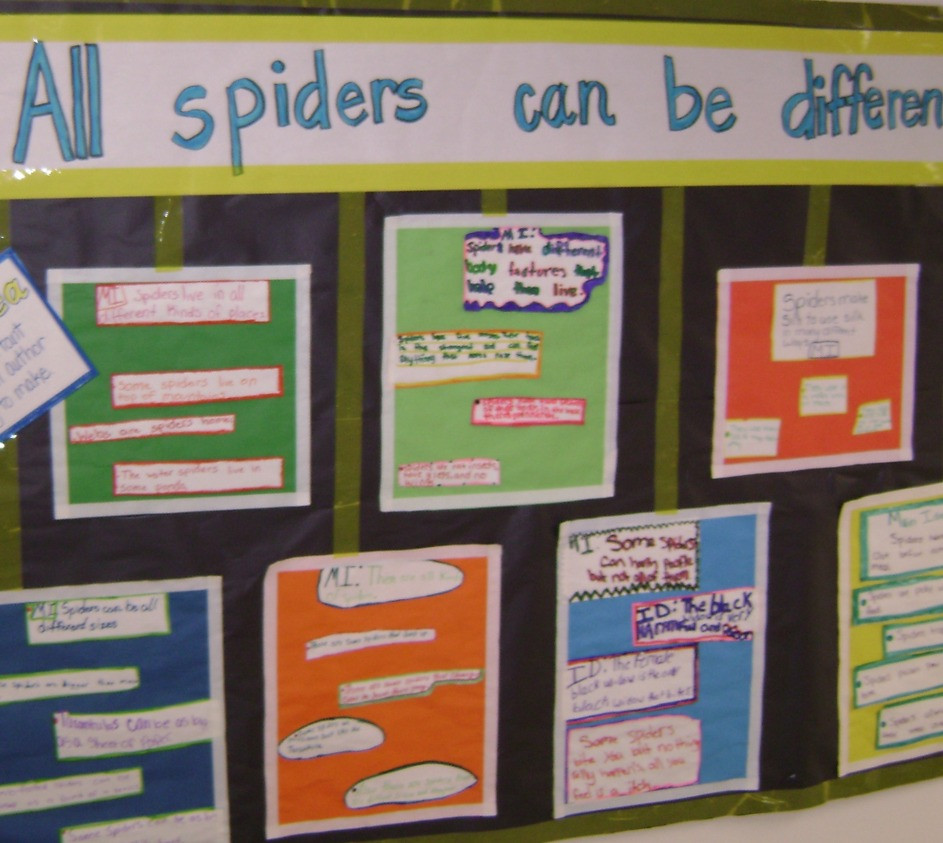 Whole group inquiry response about spiders