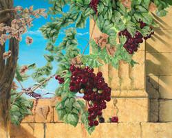 Grapes by Alan Ewart