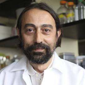 Adolfo Garcia-Sastre, Ph.D.