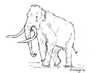 A Mammoth Hunt...