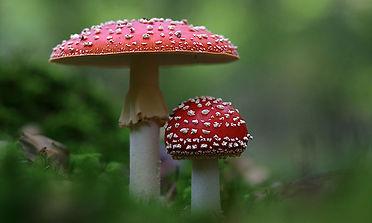 What a fungi (fun guy)