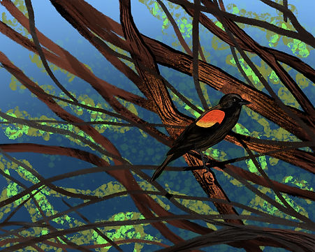 art-print-Bird-Series-Redwing-Blackbird.