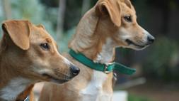 Scalea, un'area recintata per cani: la richiesta di 379 cittadini