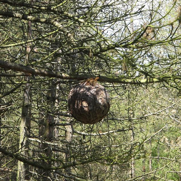 Contre Nature - Schorsbol
