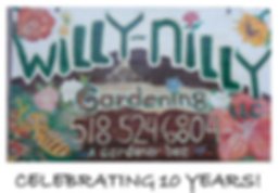 willy nilly ad.png