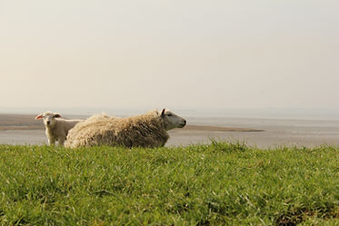 a white sheep and a cute lamb in the gre