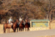 horses hnp sign edit .jpg