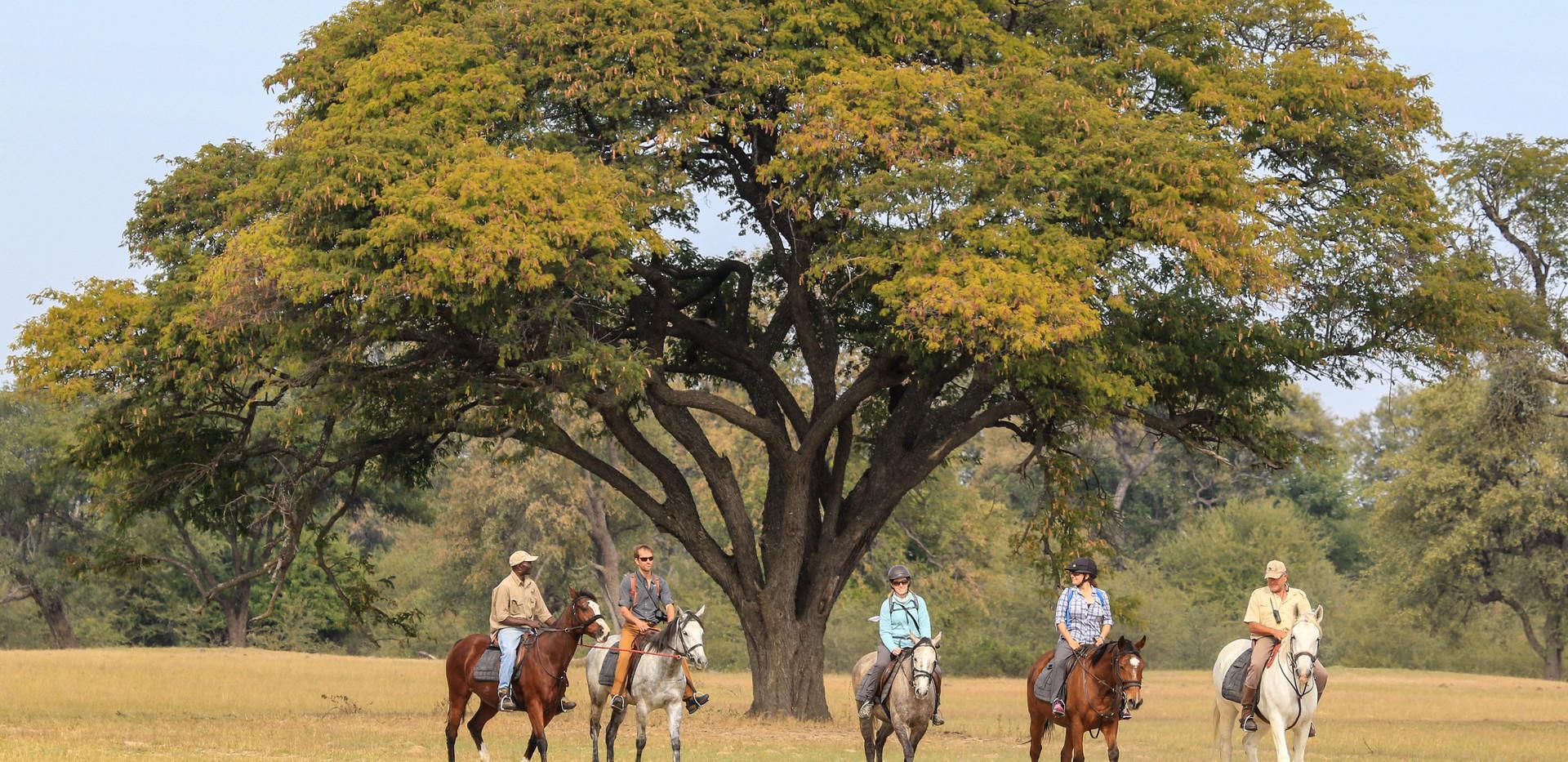 Riding on the Ngamo Plains.jpg