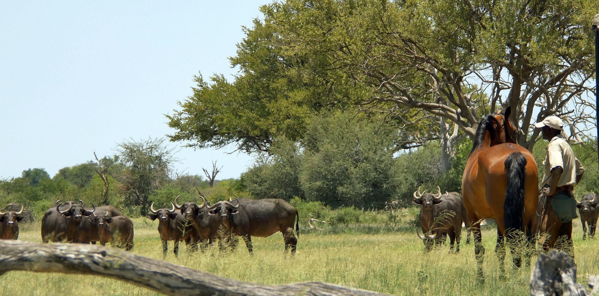 steven buffalo.jpg
