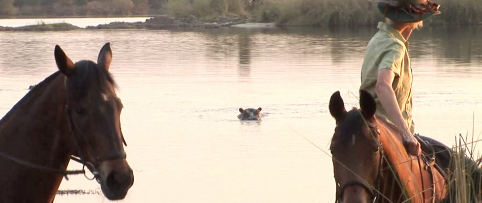 alison hippo.jpg