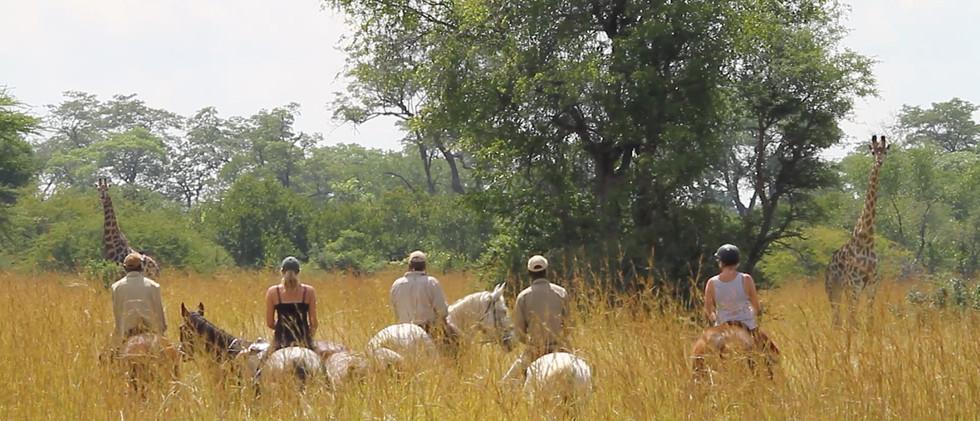 group giraffes.jpg