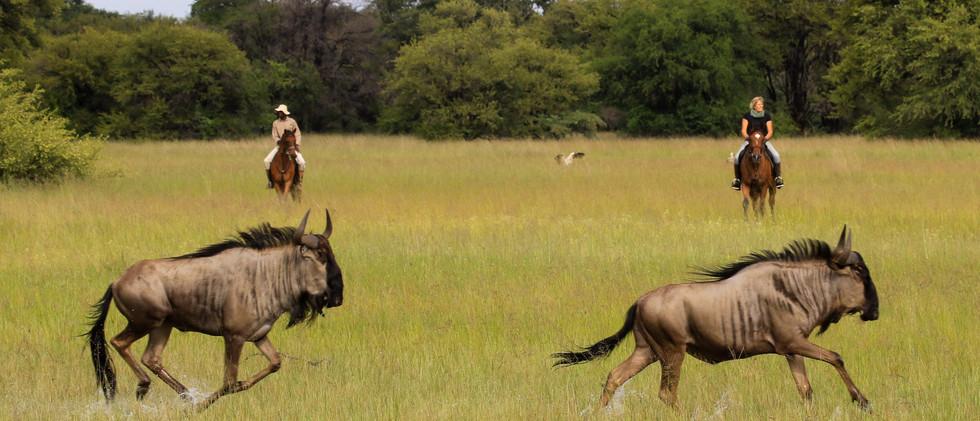 Imvelo Safari Lodges - Camelthorn - Shar